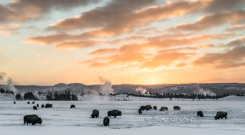 form/uploads/galerie_graek_images/pics/32_1_0_bisons_1_yellowstone.jpg